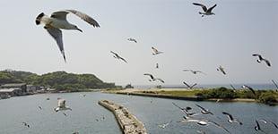フライト映像集デモ(4K)のイメージ